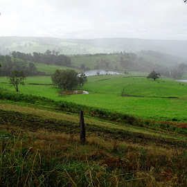 rainy day by Stefanie Hawkins - Landscapes Prairies, Meadows & Fields ( field, fence, grass, green, trees )