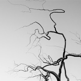 Tree by Matthew Sweetser - Artistic Objects Other Objects ( art, fine art black and white monochrome )