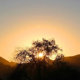 dimming by Alexz Hernandez - Landscapes Mountains & Hills ( hills, mountains, mountain, nature, tree, sunset, landscape )