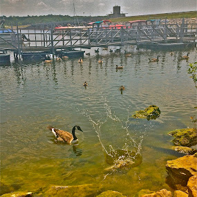 The Splash by Chris Young - Instagram & Mobile iPhone ( water, sky, blue, green, ducks, stones )