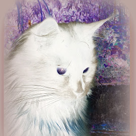 Katze by Marianne Fischer - Digital Art Animals