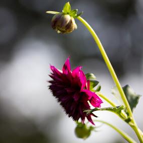 by Mi Mundo - Nature Up Close Flowers - 2011-2013