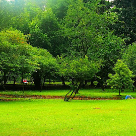 The Green Green Grass by Dedi Sukardi - City,  Street & Park  City Parks ( bogor, grass, green, botanical gardens )