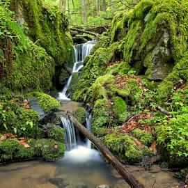 by Siniša Almaši - Nature Up Close Rock & Stone ( water, up close, stream, green, landscape, spring, dslr, colours, nature, cascade, view, stones, light, rocks, river )
