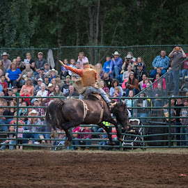 Hi flying bronc by Craig Lybbert - Sports & Fitness Rodeo/Bull Riding ( cowboy, buck, horse, bronc, rodeo, country )