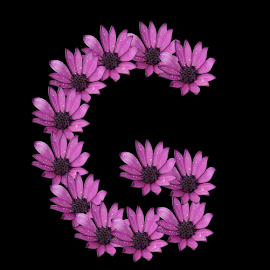 Alphabet - G by Dipali S - Typography Single Letters ( optical, optics, illustration, motivation, daisy, type, decor, inspiration, nature, calligraphy, card, place, flower, template, element, text, creative, letter, font, art, label, calligraphic, sign, frame, poster, word, typography, letters, headline, graphic, ornate, decorative, dew, captioned, title, words, quote, inscription, rain, classic, note, banner, typographic, abstract, icon, purple, vintage, decoration, advertisement, photo, message, motivational, typo, background, artistic, drops, design )