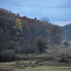 Fall Meadow by Kristina Weber - Landscapes Prairies, Meadows & Fields ( wisconsin, fog, dew, fall, meadow, evening, mist )