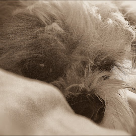 Sleepy Midget  by Sarah Sullivan - Instagram & Mobile iPhone