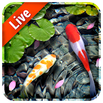 Koi Fish Live Wallpaper 3D file APK for Gaming PC/PS3/PS4 Smart TV