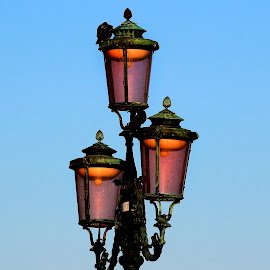 Venice by Claudiu Petrisor - Artistic Objects Other Objects ( pigeon, orange, sky, blue, venice, headlight )