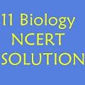 11 th Biology NCERT Solution APK for Bluestacks