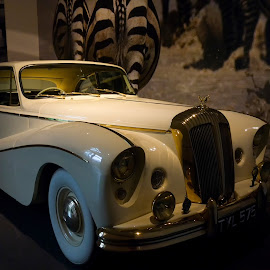 Louwman Museum, Den Haag by Serguei Ouklonski - Transportation Automobiles ( car, urban, den haag, inside, no person, vehicle, museum, travel, netherlands, historic, city )