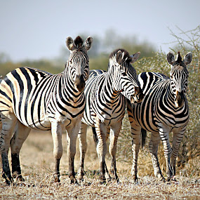 Family Photo by Pieter J de Villiers - Animals Other