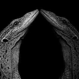 Mirror  by Abbey Gatto - Black & White Animals