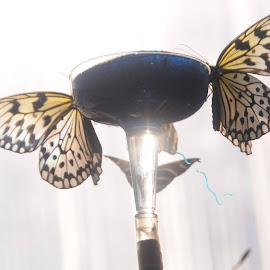 Butterflies are free and always should be  by Sarah Majidy - Nature Up Close Hives & Nests (  )