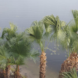 Palm Sunrise by Amber O'Hara - Landscapes Forests ( water, palm tree, florida, orlando,  )