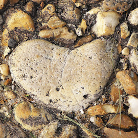 Heart in the Road by Sue Jordan - Nature Up Close Rock & Stone ( heart, nature, upclose, rock, road )