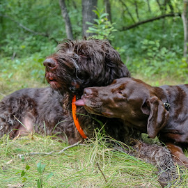 Puppy Love by Laura Gardner - Novices Only Pets ( hunting dogs, best friends, nd, pets, rescue, labrador, hiking, german wire-haired pointer )