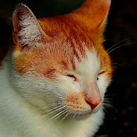 by Francois Wolfaardt - Animals - Cats Portraits