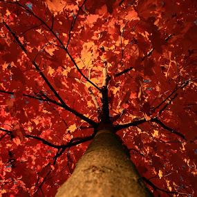 Orange Canopy Tree by Nancy Tonkin - Nature Up Close Trees & Bushes (  )