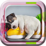 Cute Pets Live Wallpaper Icon