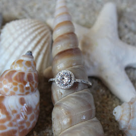 Beach Engagement by Renee Heiliger - Wedding Other ( ring, shells, wedding, beach, engagement )