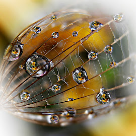 Open Your Eyes ... Pixoto In The Spring  Mirrors :-) by Marija Jilek - Nature Up Close Natural Waterdrops