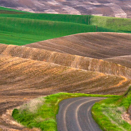 Windy road throught the green and gold hills of the Palouse. by Gale Perry - Landscapes Prairies, Meadows & Fields ( palouse, windy road, green, gold hills, spring,  )