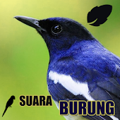 Download  Koleksi Suara Burung  Apk