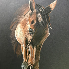 Horse by Anika McFarland - Drawing All Drawing ( colored pencil horse, horse portrait, colored pencil, horse, portrait )