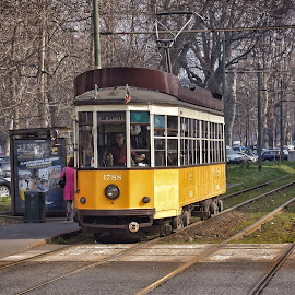 by Jose Figueiredo - Transportation Other ( old, italia, tram )