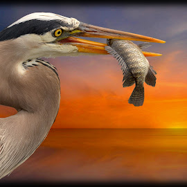 Great Blue Heron by Will Zook - Digital Art Animals