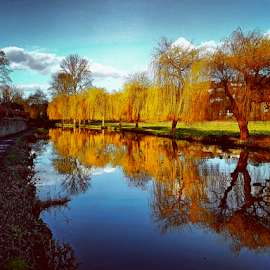 Reflections by Griff Johnson - Instagram & Mobile Android ( water, reflections, trees, samsung, canal )