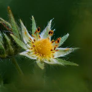 flower blended 3.jpg