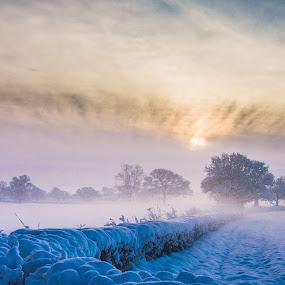 Hedge by Nigel Bishton - Landscapes Weather