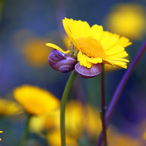 Happy nature by Gil Reis - Nature Up Close Flowers - 2011-2013 ( nature, colors, flowers )