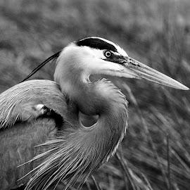 by Photo9981  XXX - Black & White Animals