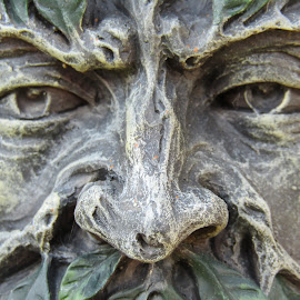 Treefolk Stare by Stuart King - Artistic Objects Other Objects ( blank, tree, wood, ornament, stare, leaves, nose, eyes )
