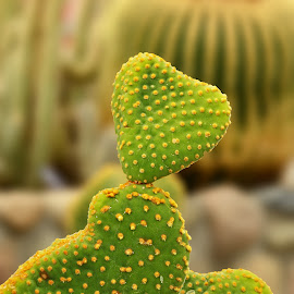 Love Cactus by Naveen Naidu - Nature Up Close Other Natural Objects
