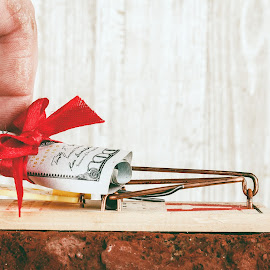 Money is a Trap by Rob Heber - Artistic Objects Other Objects ( gift, detail, gamble, pest control device, mouse trap, bill, wood, holding, brick, red brick, currency, risk, rolled up bill, hand, danger, pest control, metal, grasping, money, wood grain, closeup, ideas, red bow, latch, rolled, scroll, texture, temptation, finger, rough, rodent trap, close up, trap, red, paper money, cash, bow, hunderd dollar bill, lifting, thumb, conceptual )