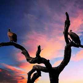 Birds with sunset by Linette Simoes - Uncategorized All Uncategorized ( sky, nature, tree, sunset, birds )