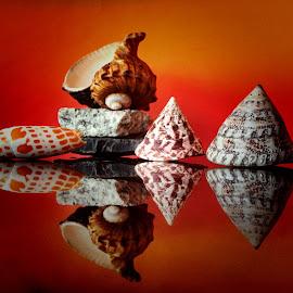 Seashells by Janette Ho - Artistic Objects Still Life (  )