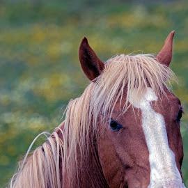 by Kishu Sing - Animals Horses