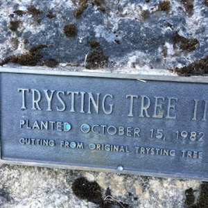 Trysting Tree IIPlanted October 15, 1982Cutting from original Trysting Tree