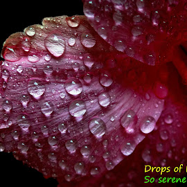 Drops... by Asif Bora - Typography Quotes & Sentences
