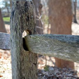 Wooden Fence by Lorraine D.  Heaney - City,  Street & Park  City Parks