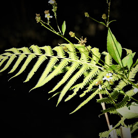 green fern by Mary Gallo - Nature Up Close Leaves & Grasses ( fern, green fern, nature, green leaf, nature up close, leaf )