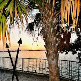 Texas Paradise by Travis Houston - City,  Street & Park  City Parks
