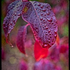 by Eugene Dopheide - Nature Up Close Trees & Bushes ( plum leaf, autumn, leaf )