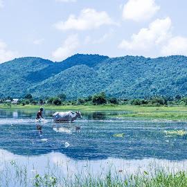 mountains, animal, human by Raksmey Yorn - Landscapes Mountains & Hills ( mountains, waterscape, khmer, cambodia, animal, human )
